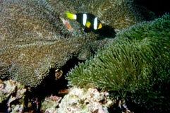 мир моря 44 andaman кораллов удивительно Стоковые Изображения