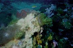 мир моря 5 andaman кораллов удивительно Стоковое фото RF