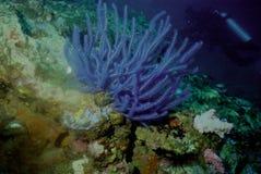 мир моря 6 andaman кораллов удивительно Стоковая Фотография RF