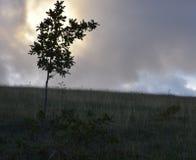 Мир, облако, небо, предел, свобода, солнце, поля, Стоковое Фото