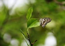 Бабочка в мире природы и искать для еды стоковое фото rf