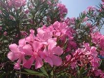 Мир розовых цветков стоковые изображения rf