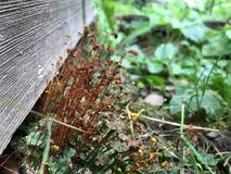 Мир сельской местности микро- Заводы рядом с древесиной листья зеленого цвета травы стоковые фотографии rf
