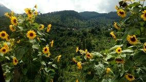 Мир солнцецвета стоковые фото