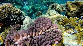Мир Beautful подводный с красочным colral рифом в Красном Море акции видеоматериалы