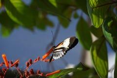 мир florida бабочки Стоковые Фото