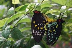 мир florida бабочки Стоковое Фото