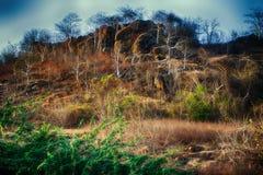 мир grunge фантазии книги предпосылки волшебный вертикальный Фантастичный необыкновенный ландшафт горы Стоковые Изображения RF