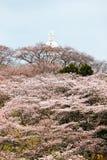 Мир Kannon Funaoka и вишневые деревья на горной вершине замка Funaoka губят парк, Shibata, Miyagi, Tohoku, Японию стоковое изображение