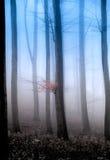 мистик пущи Стоковая Фотография RF