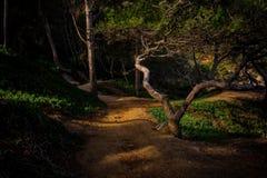 Мистическая деталь леса с славным солнечным светом Стоковое Изображение