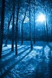мистическая зима Стоковые Фотографии RF