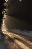 Мистическая дорога леса стоковое изображение