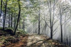 Мистическая дорога Стоковые Фотографии RF