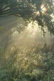 Мистическая осень Стоковые Изображения RF