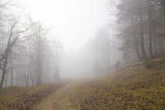 Мистическая пуща Стоковая Фотография