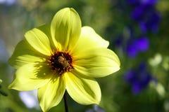 Мистическая пчела Стоковое Изображение RF