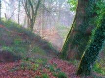 мистические древесины стоковые фотографии rf