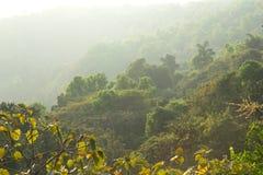 Мистические джунгли Стоковое Изображение RF