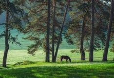 Мистический восход солнца над горой Дикая лошадь пася в мёде стоковые изображения