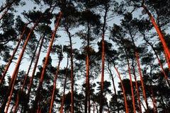 Мистический лес во время захода солнца осени Стоковое Фото