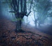 Мистический лес осени в тумане в утре старый вал Стоковые Фотографии RF