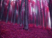 Мистический лес пинка фантазии Стоковая Фотография