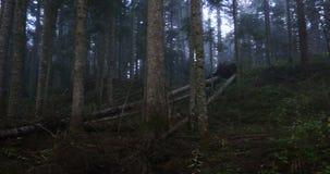 Мистический лес с туманом видеоматериал