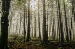 Мистический лес Стоковые Изображения