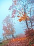 Мистический ландшафт с голубым туманом в лесе осени стоковые фотографии rf