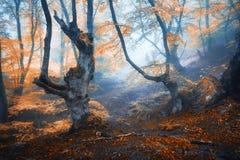 Мистический лес осени в тумане в утре старый вал Стоковое Изображение RF