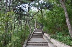 Мистический путь леса Стоковые Изображения RF