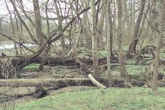 Мистическое болото Стоковая Фотография RF