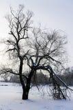 Мистическое дерево на замороженном озере Стоковая Фотография