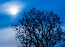 Мистическое дерево на ноче Стоковые Изображения