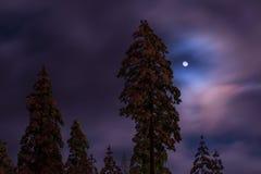 Мифическая луна Стоковая Фотография