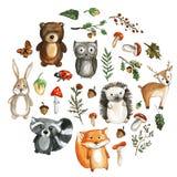 Милая акварель животных полесья отображает значки зоопарка детского сада Стоковые Изображения