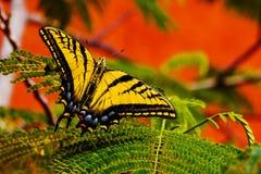 Милая бабочка Стоковое Изображение RF