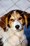 Милая бездомная собака Стоковые Фото
