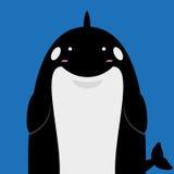 Милая большая тучная косатка дельфин-касатки Стоковое Изображение