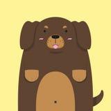 Милая большая тучная собака таксы Стоковые Изображения