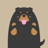 Милая большая тучная собака Rottweiler Стоковое Изображение RF
