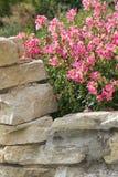 милая весна цветков Стоковые Изображения