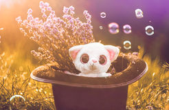 Милая игрушка lemour в волшебной шляпе culinder Стоковое Фото