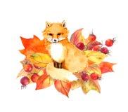 Милая лиса в листьях и ягодах осени акварель Стоковые Изображения