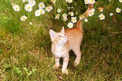 Милая киска имбиря в саде Стоковые Изображения RF