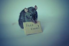 милая крыса Стоковое Изображение
