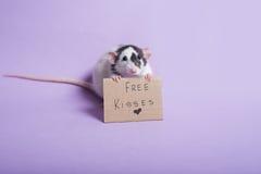 милая крыса Стоковые Фото