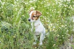 Милая малая молодая собака среди цветков и зеленой травы Весна Стоковая Фотография RF