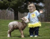 Милая маленькая девочка с овечкой стоковые изображения